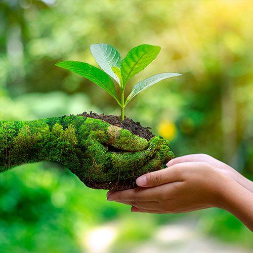 Moustique, Véto, Environnement