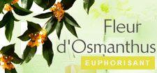 Fleur d'Osmanthus - Roger et Gallet