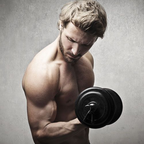 Construction musculaire