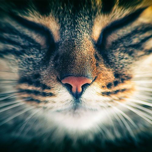 Chats, chattes et chatons